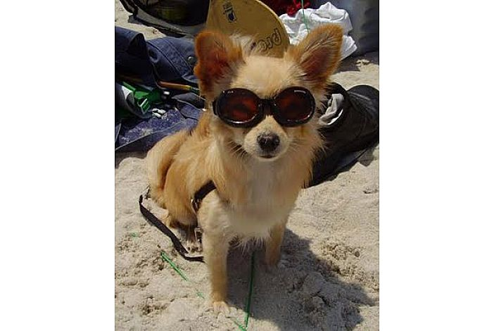 Your dog will love the beach just as much as you!